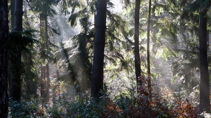 Sun streaming through the trees - a photograph featured on the Christian Art web site