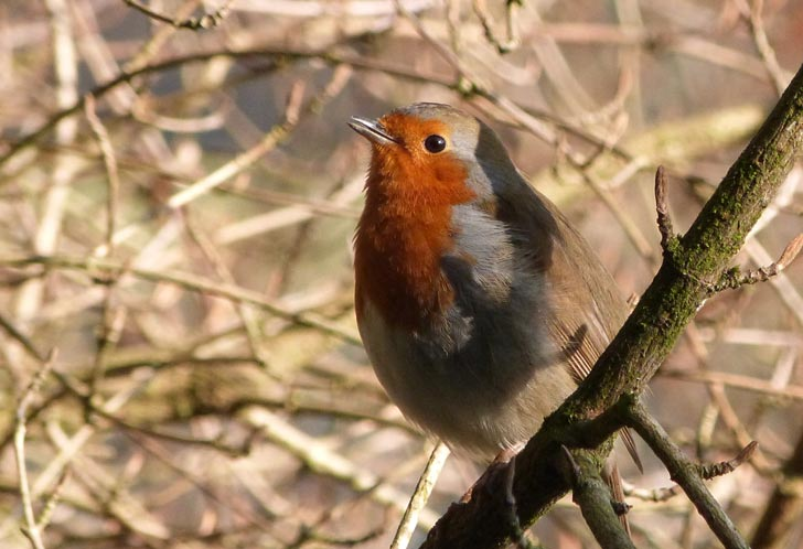 Robin - featured in the Photography section of the Christian Art web site